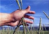 سال سخت در انتظار کشاورزی خراسان شمالی؛ آیا بیمه خسارات را جبران میکند؟