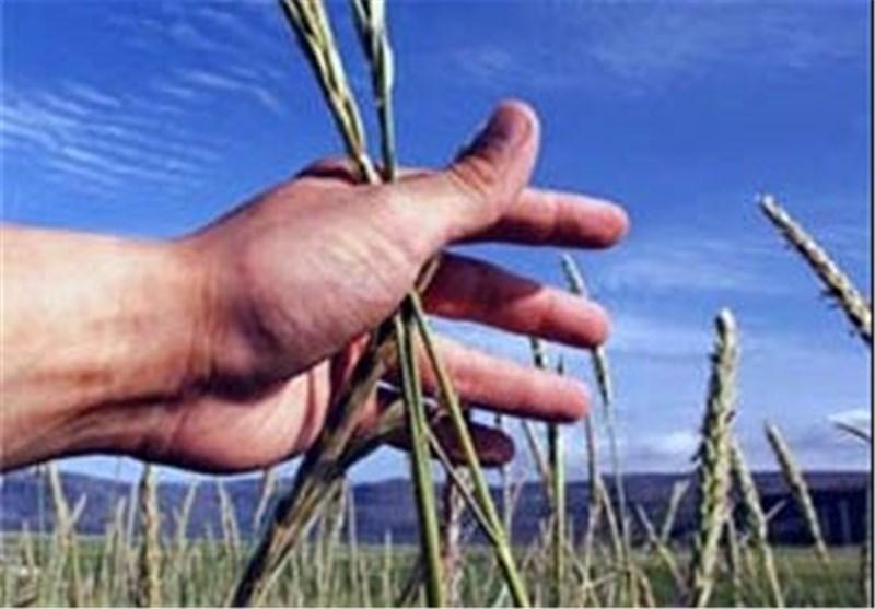 60 درصد محصولات کشاورزی استان گیلان تحت پوشش بیمه کشاورزی قرار دارد