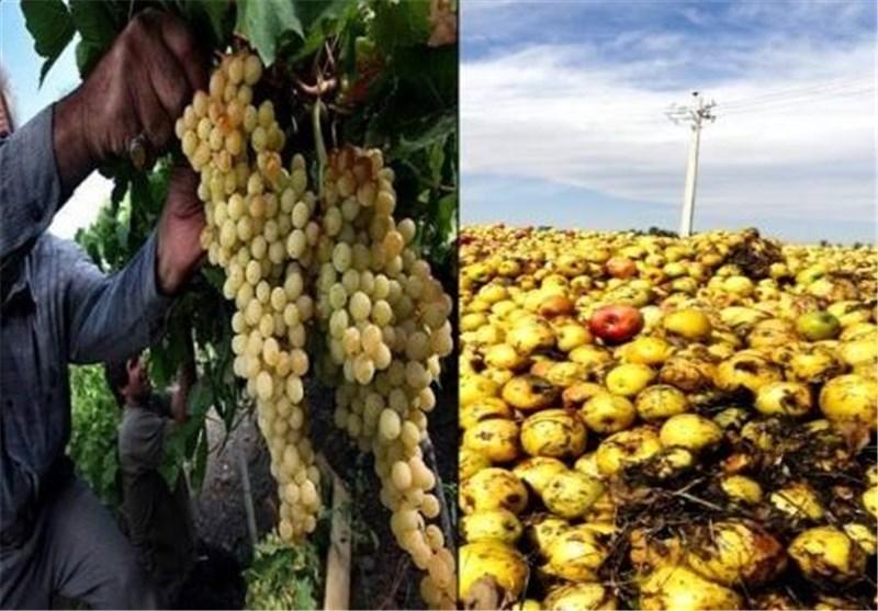 خسارت 195 میلیاردی سرمازدگی به محصولات کشاورزی لارستان