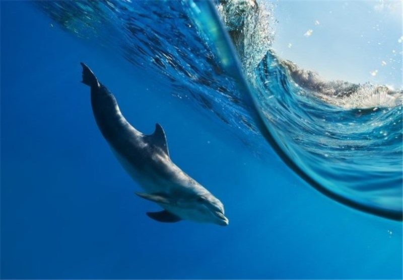 Researchers Discover New Bomb-Detecting Radar Method Inspired by Dolphins