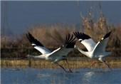 مهاجرت پرندگان به جزیره کیش آغاز شد