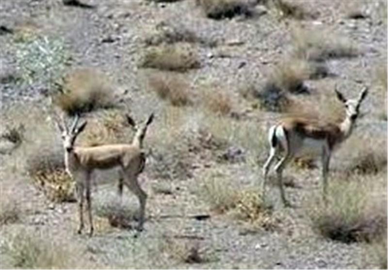 احتمال هجوم پرندگان و دیگر حیوانات به مناطق روستایی فارس