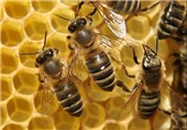 Humans Have Been Using Bees for at Least 9000 Years