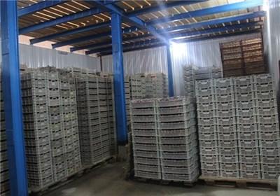 سرمایهگذاری 170 میلیون دلاری هلند برای ساخت 10 سردخانه در ایران