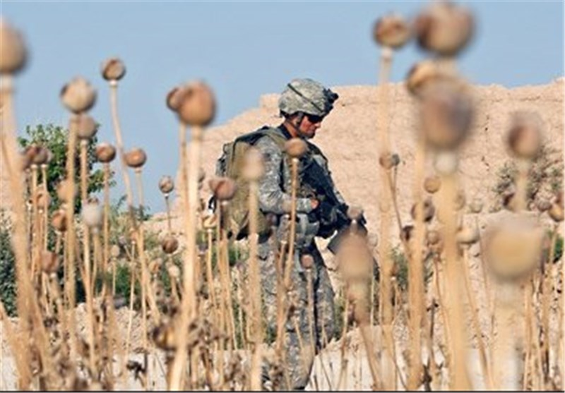 ​Land Used for Opium Cultivation at Historic High: UN
