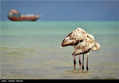 Birds in Iran's Southern Island of Kish