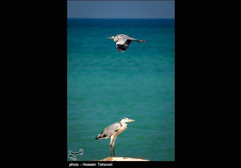 Birds in Iran's Southern Island of Kish