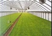 سطح احداث واحدهای گلخانهای در استان قزوین 2 برابر میشود