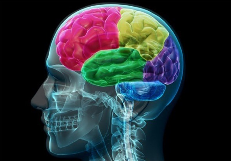 Your Brain Processes Information Even When You're Not Conscious: Study