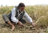 سلمانزاده:سیاستگذاران سالها از «کشاورزی دهقانی» غفلت کردهاند