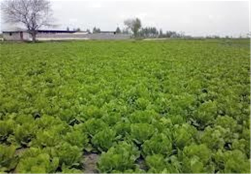 صادرات 6 محصول کشاورزی به عراق ممنوع شد