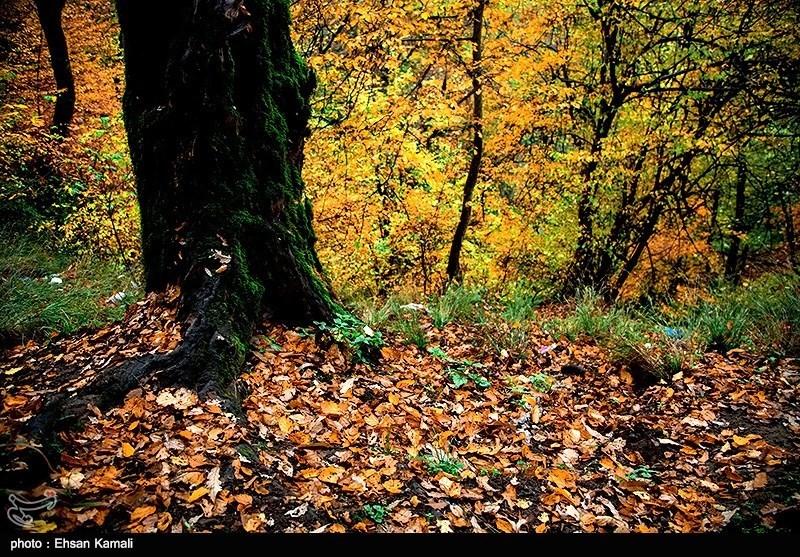 پاییز در شمال ایران