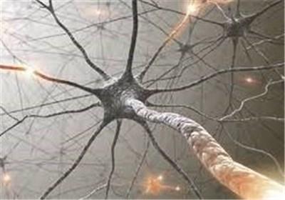 نورون مغزی