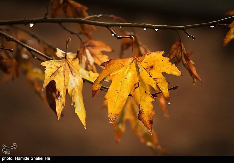 پاییز- عکاس: حمیده شفیعی ها
