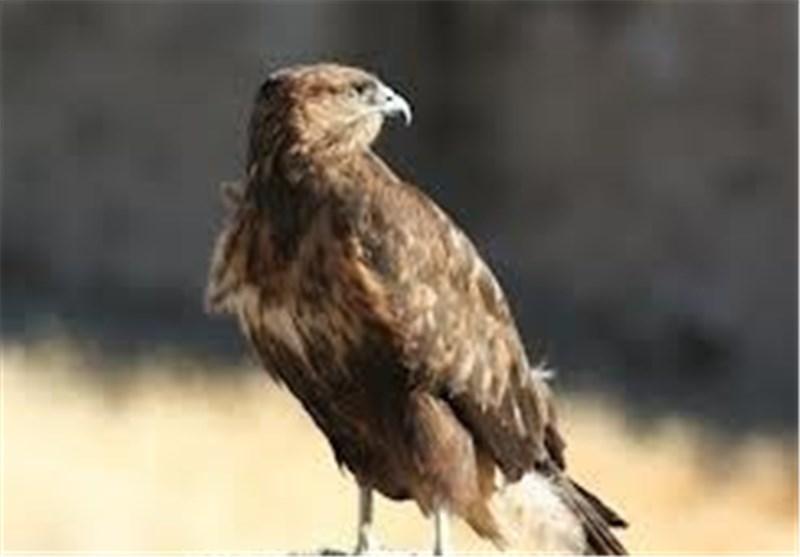 آغاز واکسیناسیون بیماری نیوکاسل پرندگان پارک وحش اراک