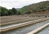 8 میلیارد تومان اعتبار تسهیلات برای پرورش ماهی در البرز اختصاص یافت