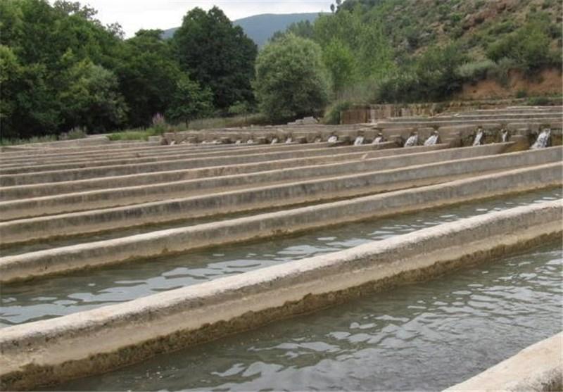 افزایش 70 درصدی پرورش ماهی قزلآلا در شهرستان ماسال