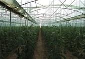105 هکتار از اراضی دهاقان در اختیار گلخانهداران قرار گرفت