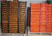 تولید 79 هزار تن مرکبات در جویبار