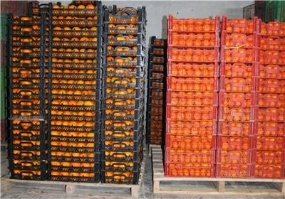 توزیع سیب و پرتقال شب عید از 20 اسفند