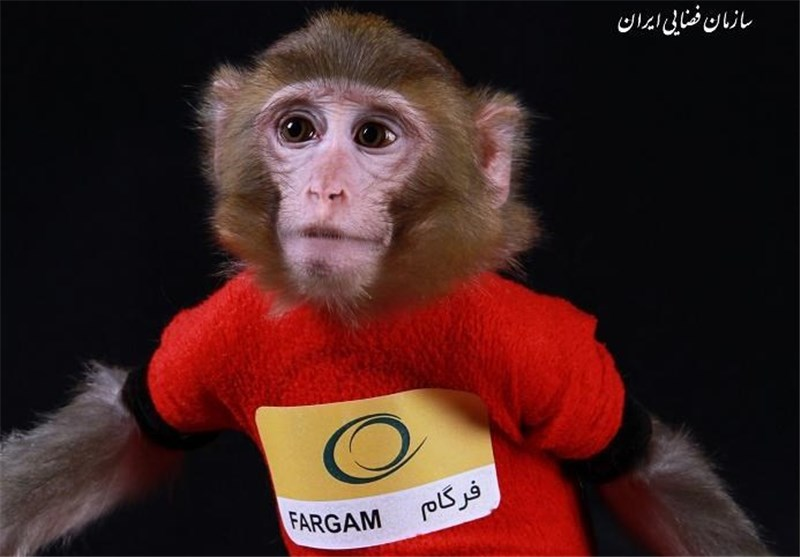 Iran's Second Space Monkey Returns to Earth Safe