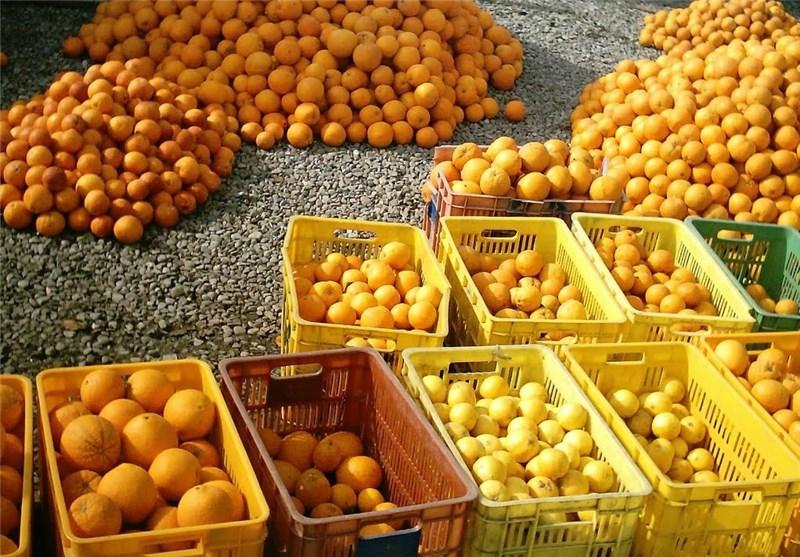 توزیع 19 تن میوه در سطح شهرستان آبدانان