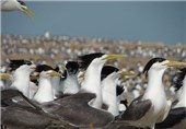زادآوری 35 هزار پرنده در تالابهای شهرستان بروجن