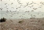 آغاز کوچ پرندگان به مناطق تالابی و رودخانههای بوشهر