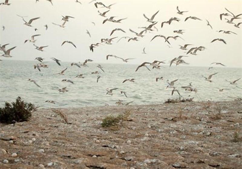 پرندگان تالاب 1