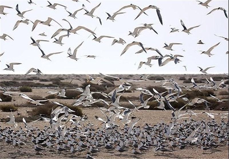 شروع مهاجرت پرندگان به آبدانان با وجود 3 زیستگاه