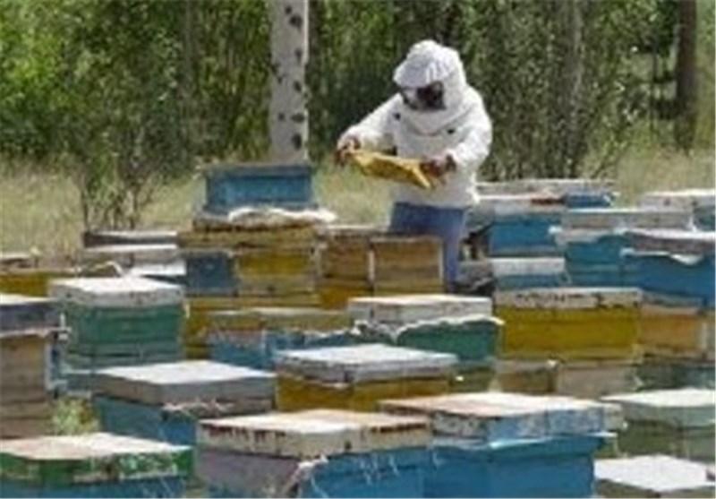 اصفهان  استمرار خشکسالی و ریزگردها سبب کاهش تولید عسل در شهرضا شده است