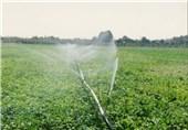 10 هزار هکتار اراضی کشاورزی استان بوشهر به آبیاری نوین مجهز میشود