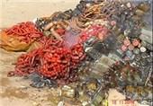 بیش از 22 تن مواد غذایی فاسد در استان همدان کشف و امحا شد