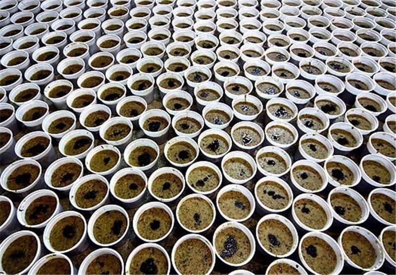 تصاویر توزیع غذای نذری بین ارامنه در روز تاسوعا