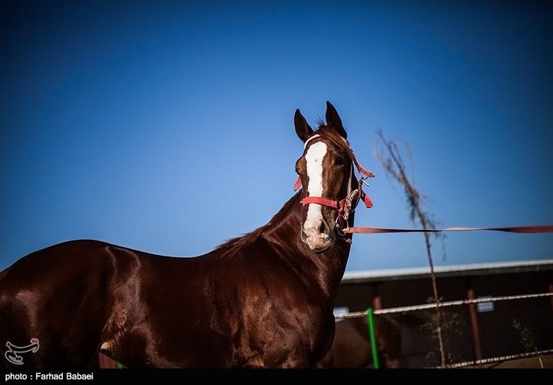 پرورش اسب