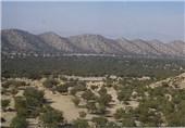 کاشت 3000 اصله نهال بلوط در جنگلهای کازرون