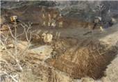 وفامهر: یک درخت هم در پروژه باغ معنوی جمشیدیه قطع نشد/برخی به این باغ «چشم» دارند