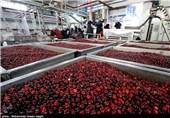 ضرورت تقویت تشکل های کشاورزی مازندران برای امنیت غذایی