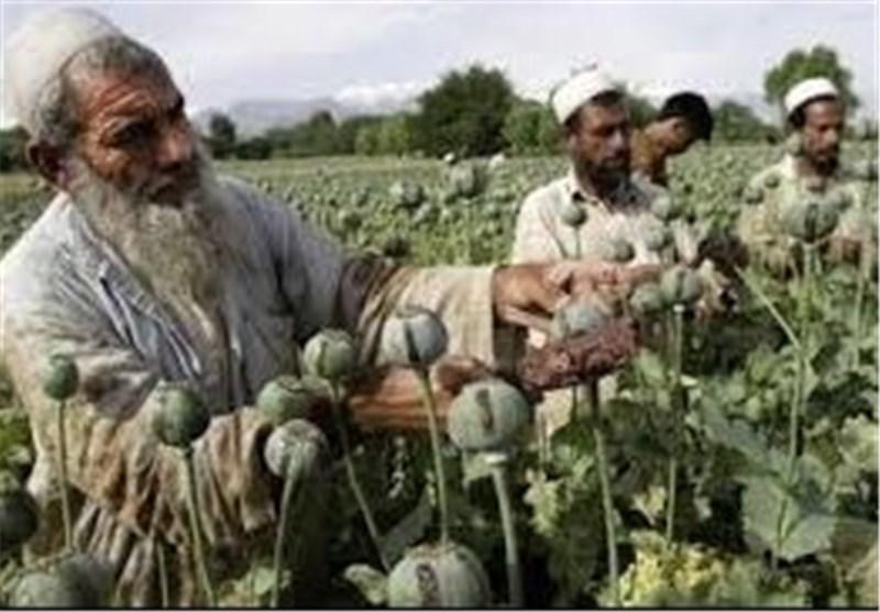 """تحذیرات من تحول افغانستان الى """"دولة جریمة ومخدرات"""""""