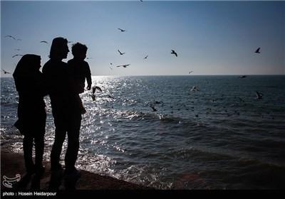 غذا دادن به پرندگان ساحلی به مناسبت روز ملی حیوانات - بوشهر