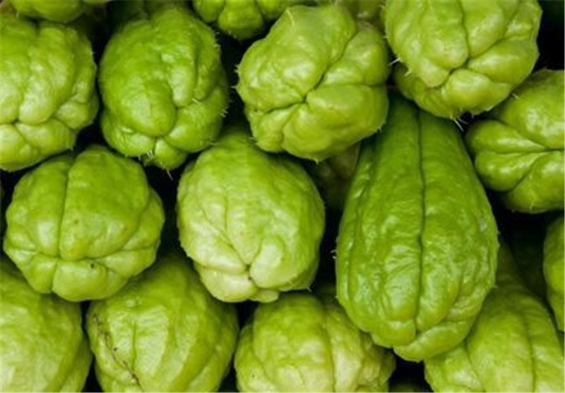 چایوته گیاهی ناشناخته در شرق مازندران/ غذای مناسبی برای درمان چاقی