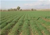 بیآبی دلیلی بر توقف کشت پاییزه در اصفهان نخواهد بود