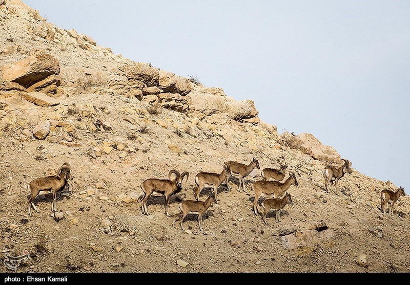 Baba Aman Park in Bojnord: A Tourist Attraction of Iran