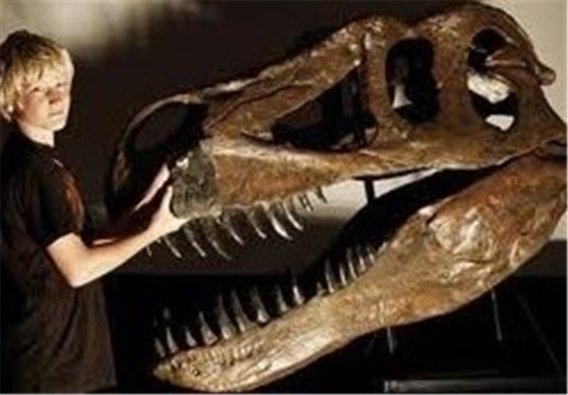 Remains of Europe's Largest Predatory Dinosaur Discovered in Portugal