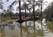تغییر روش آبیاری 20 هزار هکتار اراضی نخیلات بوشهر