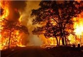 آتش سوزی جنگلهای بهمئی عمدی است