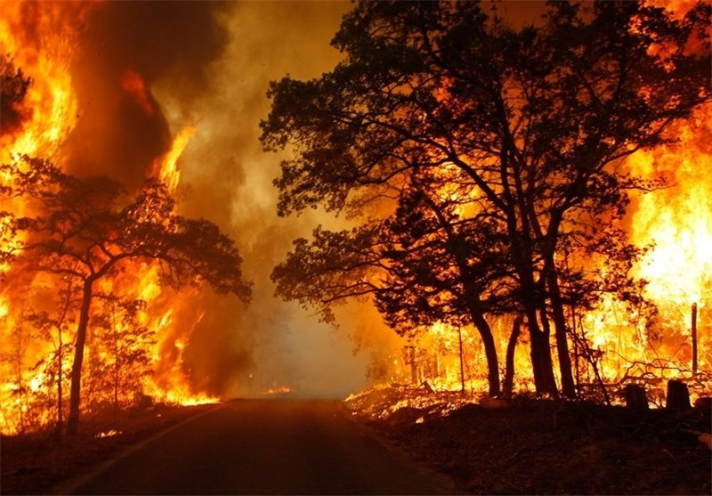درخت آتش سوزی جنگل