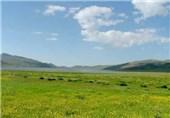 اختصاص 50 میلیارد ریال به بخش مرتع استان مرکزی؛ وجود بیش از دو میلیون هکتار اراضی ملی