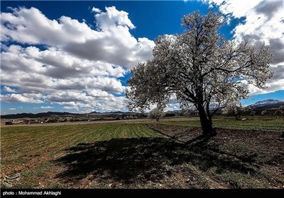 Iran's Beauties in Photos: Spring in Iran