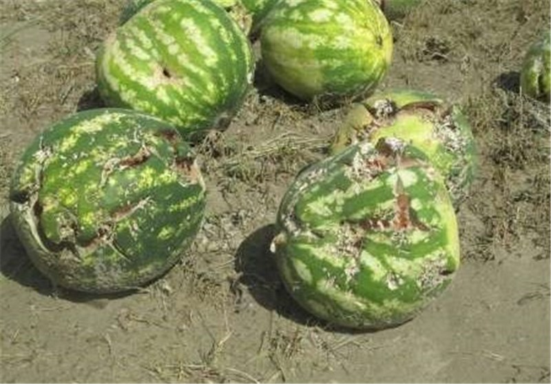 خسارت بر کشاورزی